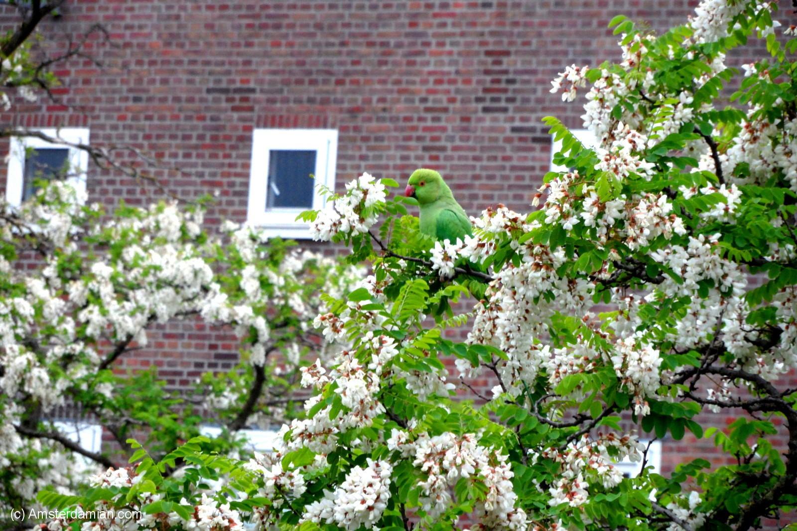 Amsterdam Pets_Gone_Wild