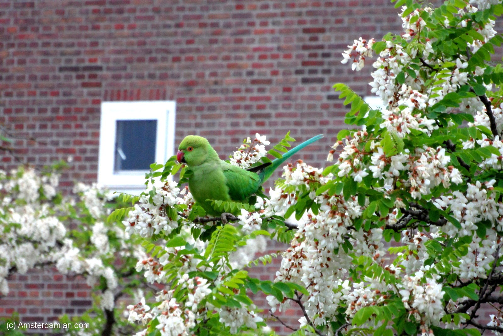 Amsterdam Pets_Gone_Wild_2